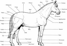 Small Picture Pictures Of Horses Jumping Jumping Coloring Pages Coordinizecom