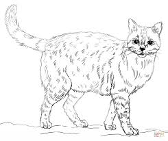 Small Picture Realistic Cat coloring page Free Printable Coloring Pages