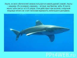 Белая акула доклад фото Животный мир Акулы реферат класс  Акулы реферат 4 класс