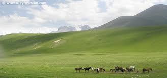 Природа Кыргызстана Альпийские луга на склонах Тянь Шаньских гор