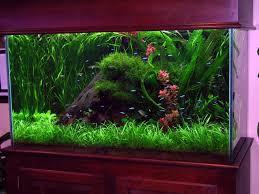 betta fish tank decorations combine with diy fish tank decor combine with fish tank decorations fish tank decorations ideas for fresher and