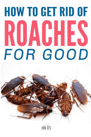 how to get rid of roaches for good