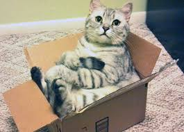 Fat Cat with Box Compilation 2016