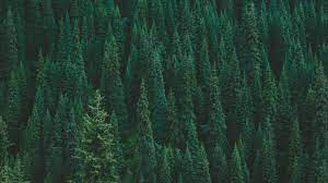 Dark Green Forest Wallpapers - Top Free ...