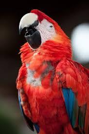 parrots for kids. Exellent Kids Parrots Temporal Range Eocene U2013 Recent Intended For Kids A