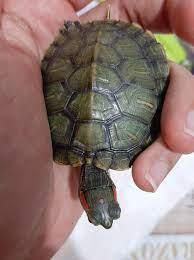 Su kaplumbağam ve Akvaryumu