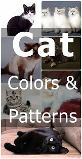 Cat Coat Colors And Patterns Cat Articles