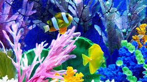 3d Wallpaper Fish Aquarium 60 Find Hd Wallpapers For Free