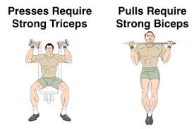 apart from the ego shot you get from bigger arms here are 2 more reasons to build muscular stronger arms muscles