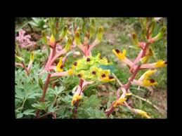 <b>Весенние цветы</b> в вашем саду - YouTube