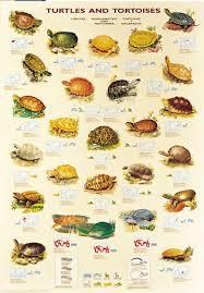 Turtles And Tortoises Forest Wildlife Poster Tortoise