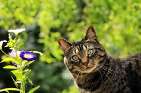 plants poisonous to cats flowers