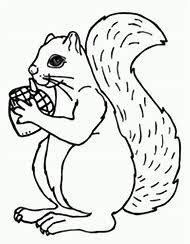 Best Acorn Coloring Page Ideas And Images On Bing Find What You