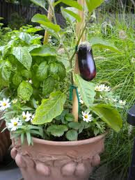 Kitchen Garden In Pots 11 Inspiring Pictures To Start Vegetable Gardening In Pots