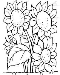 Sunflower Coloring Pages Flower 1001 Coloringpages Plants Flowers