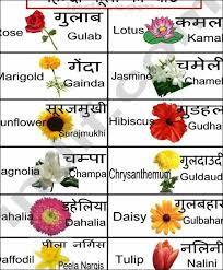Translation Chart Hindi To English Hindi Flowers Chart Hindi Language Learning Flower Chart
