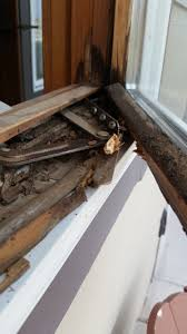 Pella Windows Louisville Ky Top 516 Reviews And Complaints About Pella