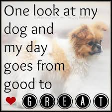Love My Dog Quotes Magnificent I Love My Dog Quotes Sayings For You Best Quotes Everydays