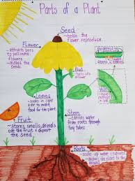 Parts Of A Plant Anchor Chart Parts Of A Plant Plants Seeds