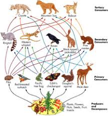 food web diagram examples   printable wiring diagram schematic        tropical forest food web on food web diagram examples