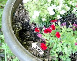 how to keep squirrels out of garden. Impatiens, Geraniums, Columbine, And The Squirrels Seem To Leave My Begonias Alone Though I Have Heard That They Are Not Against Eating Them Also. How Keep Out Of Garden