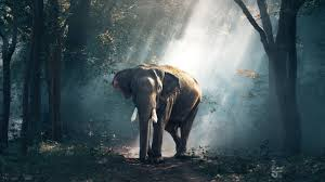 Free Download Wallpaper of Elephant ...