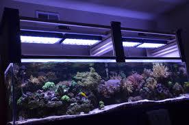 fish tank lighting ideas. Fish Tank Lighting Ideas D