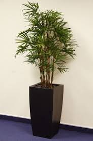office pot plants. Office Plants, Great Pot \u0026 Tropical Plants For Your Offices \u2014 Nature At Work X