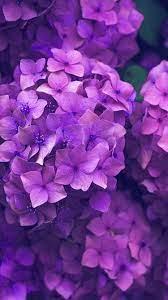 Purple flowers wallpaper, Purple ...