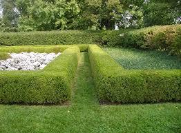 Image result for beautiful green velvet boxwood