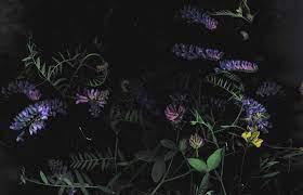 Purple and pink petaled flowers, dark ...