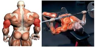 Spotting 101 How To Spot The Bench Squat And Dumbbell PressHow To Find Your Max Bench Press