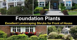 landscaping shrubs for front of house