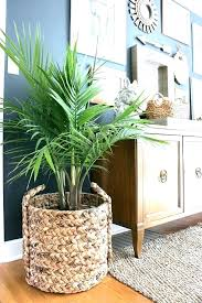 large wire hanging plant baskets use a basket as a planter wire wall baskets for plants