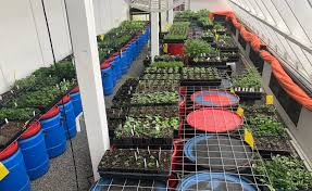 passive solar greenhouse in early april