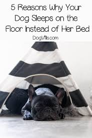 Puppies and older dogs are also more vulnerable to the cold. 5 Reasons Why Your Dog Sleeps On The Floor Instead Of Her Bed Dogvills