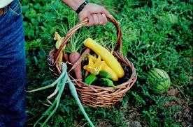 hire a gardener and start gardening organically