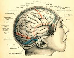 """17 best ideas about human brain diagram neurology """"but you said she was fine """" mrs jones s hands returned to the straps"""