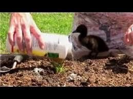 control ants in vegetable gardens