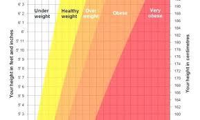 Muscle Mass Chart Lifeselector Online