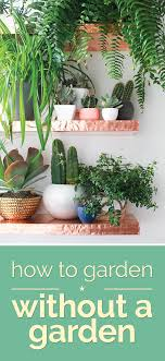 best garden plants. Best Indoor Plants Garden
