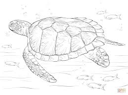 Green Sea Turtle Coloring Page Free