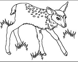 Disegni Da Colorare Sul Computer Degli Animali Fredrotgans