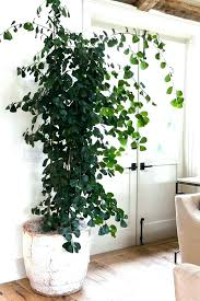 large indoor plant pot