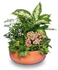 GARDEN PLANTER Green & Blooming Plants