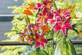 <b>Lilies for</b> Long Summer <b>Blooms</b>
