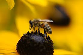 secret life of bees essay the secret life of bees essay