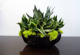 indoor plant decoration interior design for home nice interior landscaping office plants with amazing office plants