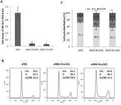 Oncotarget   A novel mitosis-associated lncRNA, MA-linc1, is ...