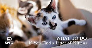 What To Do When You Find Stray Kittens